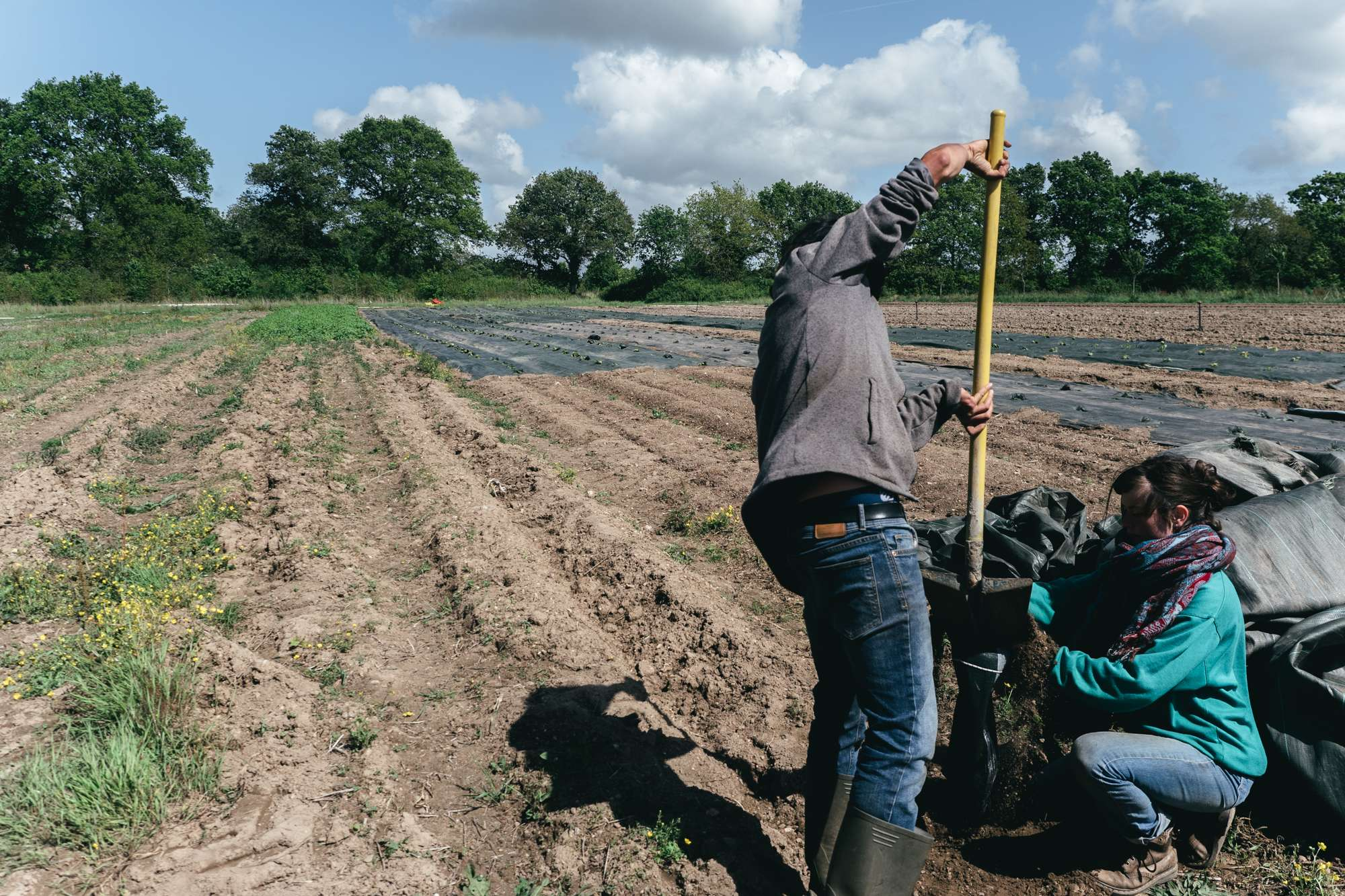 À Chauvé, le 25 mai, des Woofers travaillent sur l'exploitation paysanne de Hubert et Yohann. Photographie : Collectif Prism pour Radio Parleur.